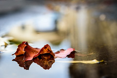 Autumn in Reflection - Photo of Carnas