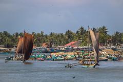 Sri Lankan Dhows
