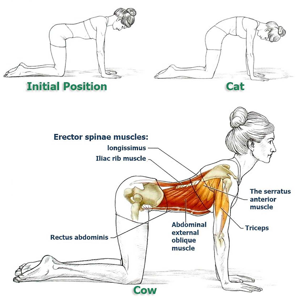 8 Exercises To Improve Your Posture And Relieve Your Back & Spine - Cat & Cow: Cat & cow poses are very common poses that you'll see in the beginning of most yoga classes - it's like a warm-up. Cat & cow is great for happy spine, massages the internal organs, stretches the belly, builds muscles in the back and can also reduce. You can pad the knees with a blanket or we can double up the mat. Start the pose on your hands and knees. Spread your palms as wide as you can and place them underneath the shoulders, knees directly underneath the hips. Move your belly downward and the shoulders upward while looking towards the sky as you inhale – that's cow. As you exhale, curl your tailbone under travel up the spine, draw the navel up towards the sky, chin slowly rotates, tilts towards the chest.