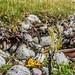 Marine litter. Anthropocene layer of plastic. by Snemann