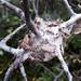 spiders nest