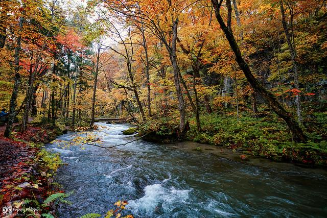 秋色是山巒中的一抹紅 | 13