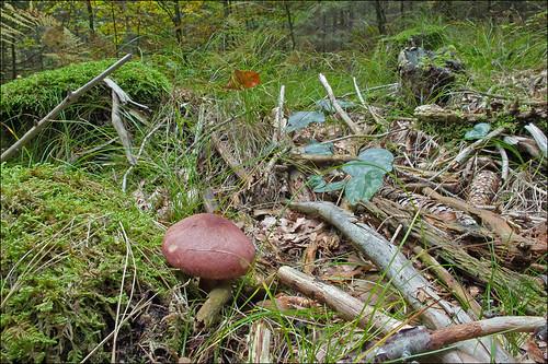 Photo taken by Amadej Trnkoczy (www.flickr.com/photos/atrnkoczy/) Автор фото: Amadej Trnkoczy (Slovenija)