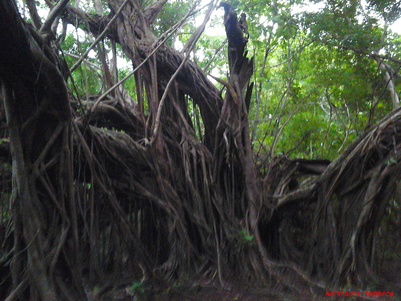 Foreboding balete tree