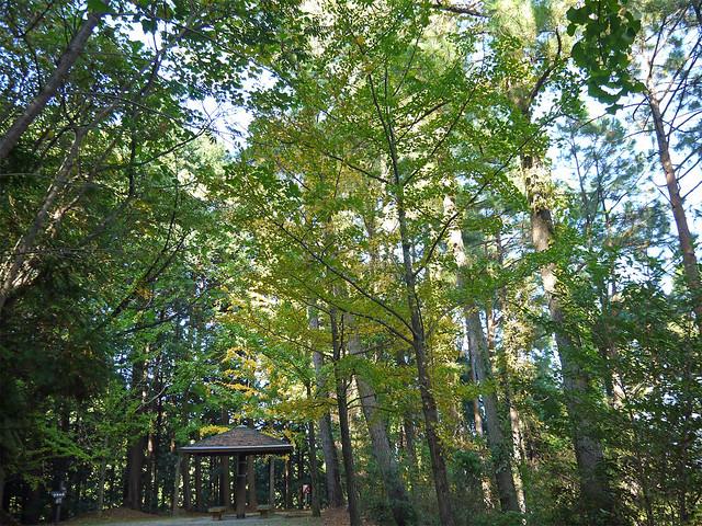 油山市民の森⑤