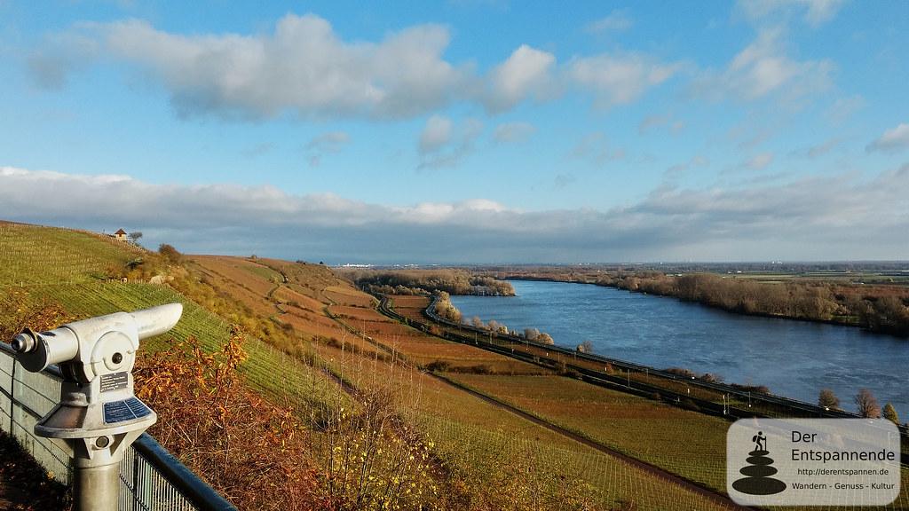 Schönste Weinsicht 2012 über dem Rhein