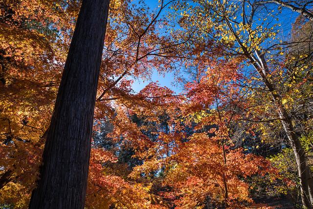 一丁平の紅葉が綺麗