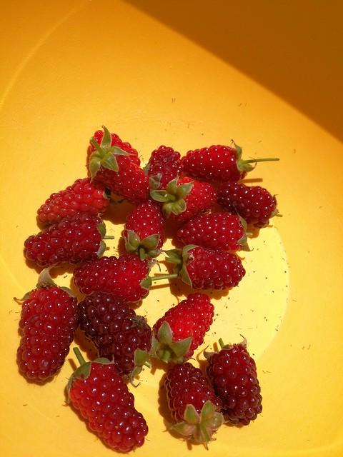 19 individual boysenberries