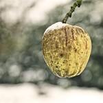 2017:12:10 14:09:47 - Apfel als Winterfutter - Bokeh