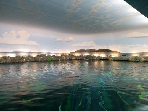Across the lagoon surface #toronto #ripleysaquarium #aquarium #lagoon #latergram