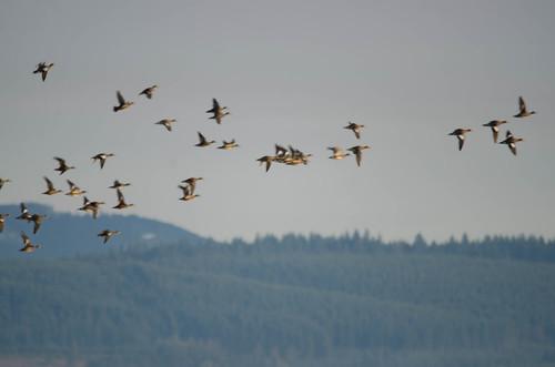 Skagit Wildlife Area-013