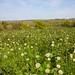Sussex Weald in Bloom