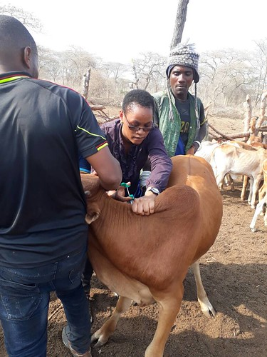 ECF-ITM vaccination exercise in Mbeya, Tanzania