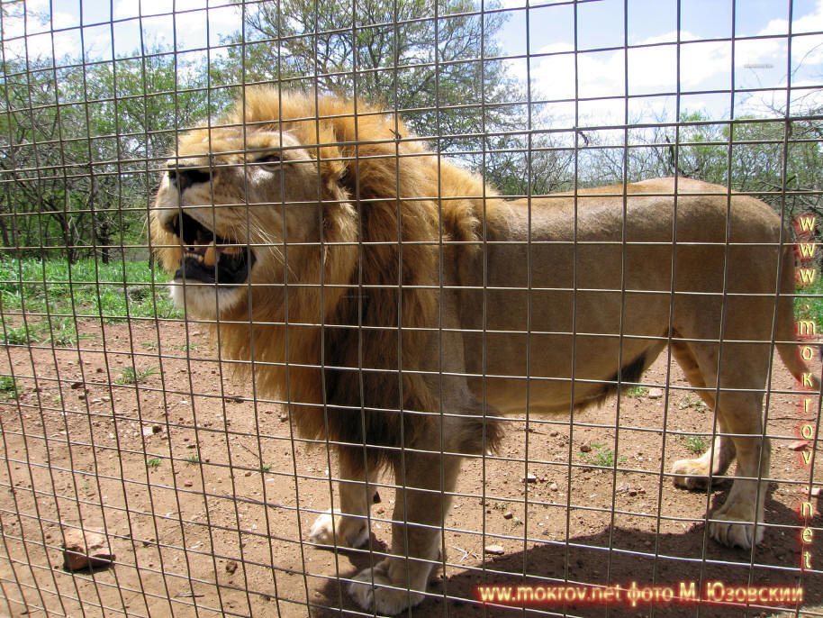 Национальный парк Зулу Ньяла, Львиная ферма