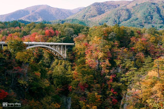 秋色是山巒中的一抹紅 | 31