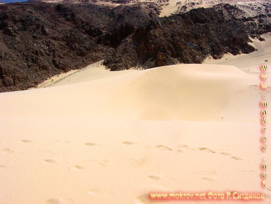 Синайская пустыня на Майне с фотоаппаратом прогулки туристов