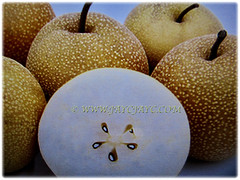 Edible fruits of Pyrus pyrifolia (Asian Pear, Chinese Pear, Korean Pear, Japanese Pear, Taiwanese/Sand Pear) with five seeds inside, 24 Nov 2017