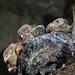 Oilbirds - Cueva De Los Tayos, Ecuador