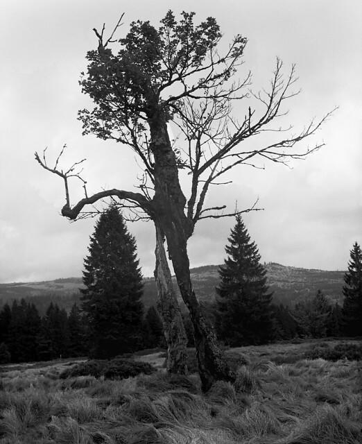 Two-legged tree
