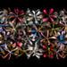 Stars of Petals on Black Variation 2 by Harold Davis
