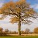Lone (ish) Autumn Tree