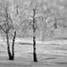 2017_365-323 (#2515) - Hint of Winter