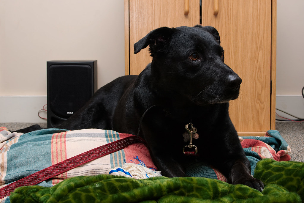 Our dog Ellie on her second day with us after we adopted her in January 2009