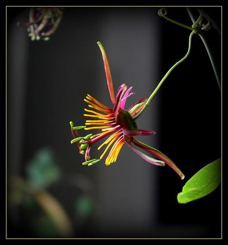 dernières fleurettes de l'année 38747721562_3a07e81653