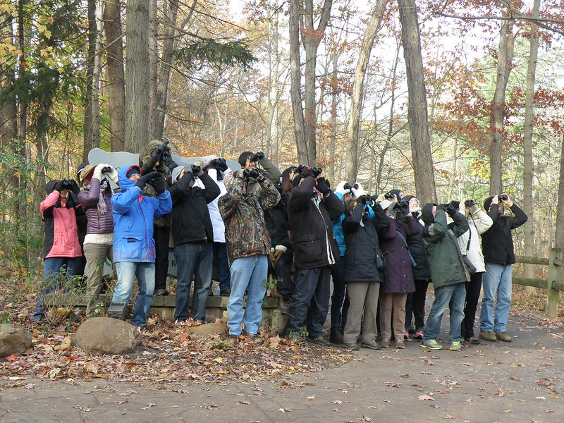 November 2017 Birders by Penny O'Connor