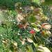 DSC09632.jpg by H.d.P