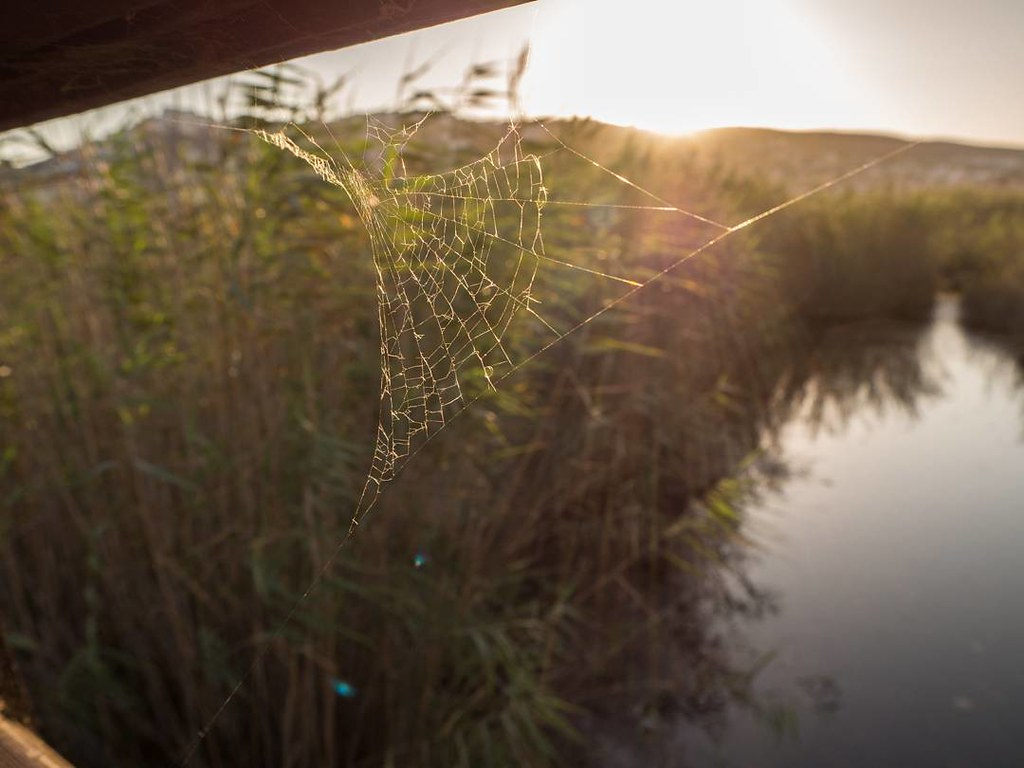 Telaraña. #spiderweb #sunset #peñiscola #summer2017 #Olympus #photography
