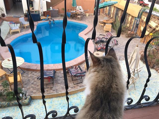 バルコニーでご飯を食べていると、猫がやってくる