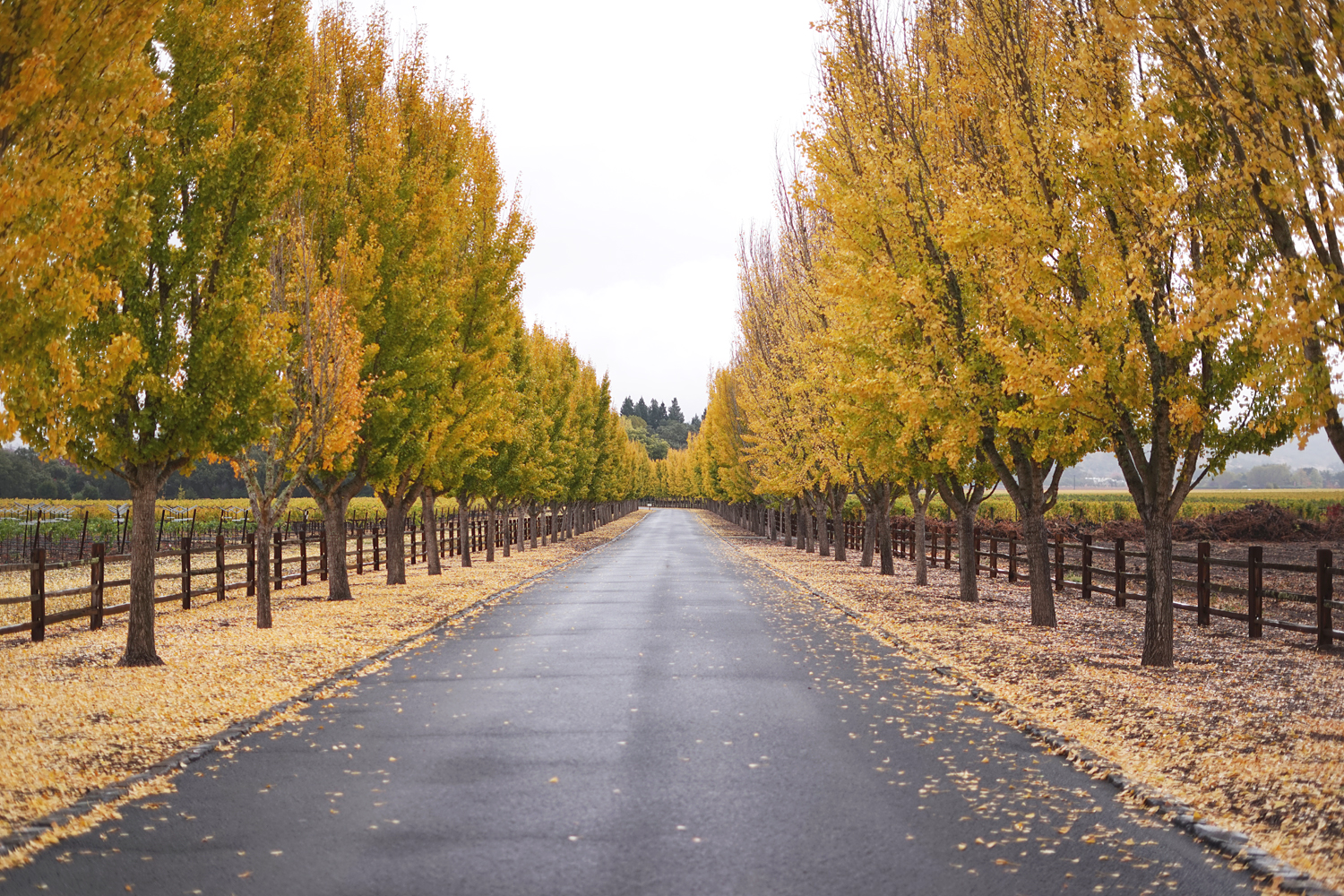 05napa-winecountry-vineyard-fall-travel