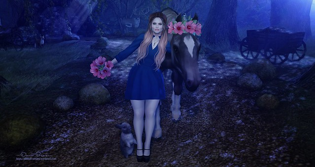[dani] Midnight Nature Walk
