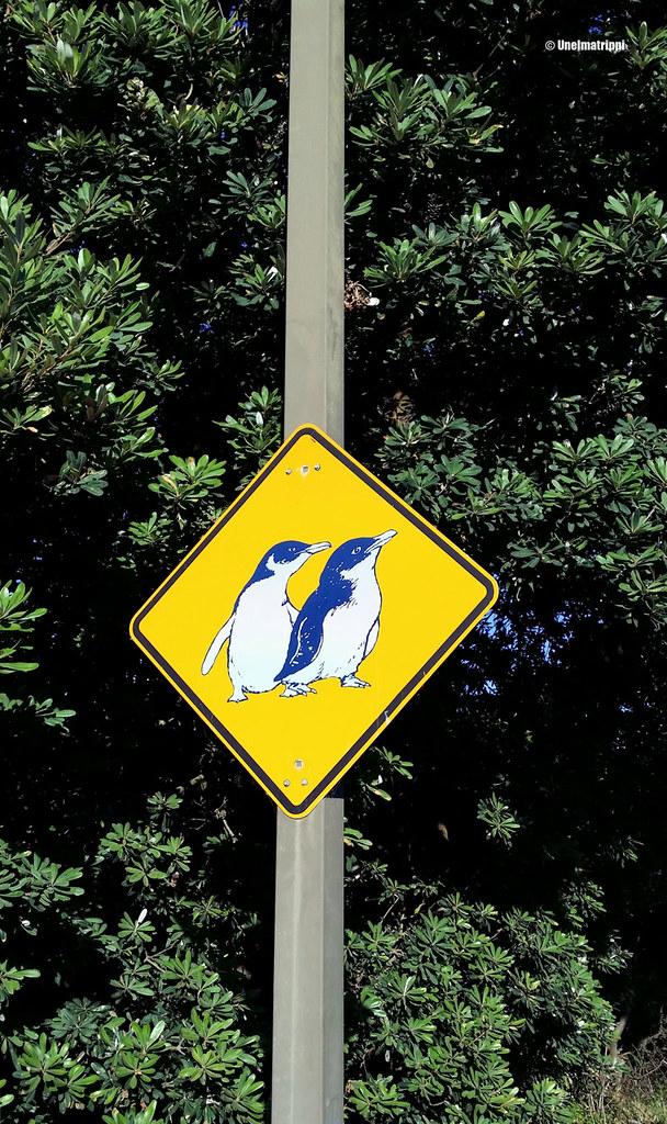 Pingviinivaroituskyltti Phillip Islandilla Australiassa