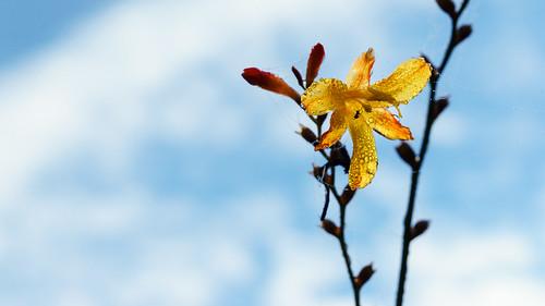Blüte mit Bewohner