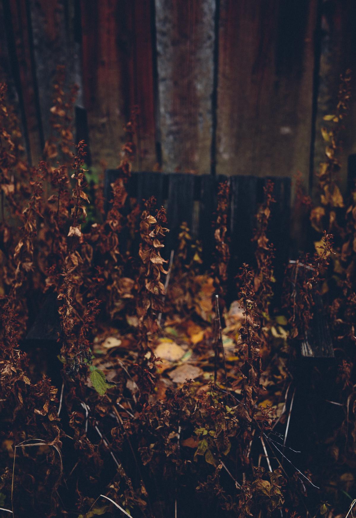 November | Cashew Kitchen