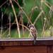 Vogelbesuch an einem verregneten Sonntag III