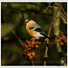 Autumn at the Arboretum-8830