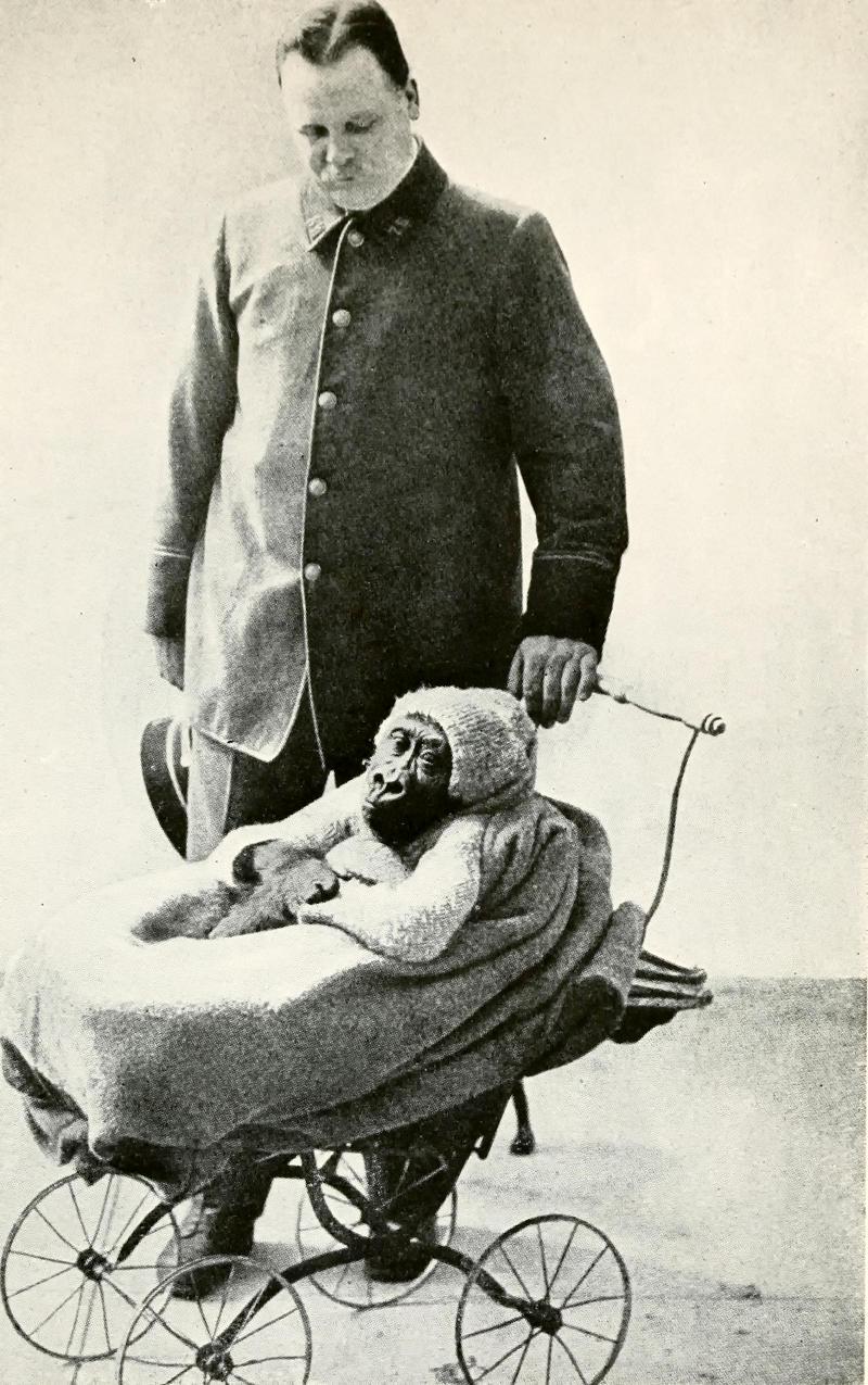 Baby gorilla in a pram, 1917