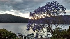 Dangar Island Evening