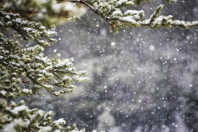 20171118 Snowfall 16