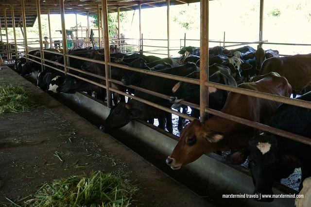 Fazenda de Esperanza in Masbate