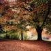 Autumn in Moor Park, Preston