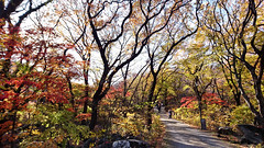 Mt. Geumjeongsan 金井山