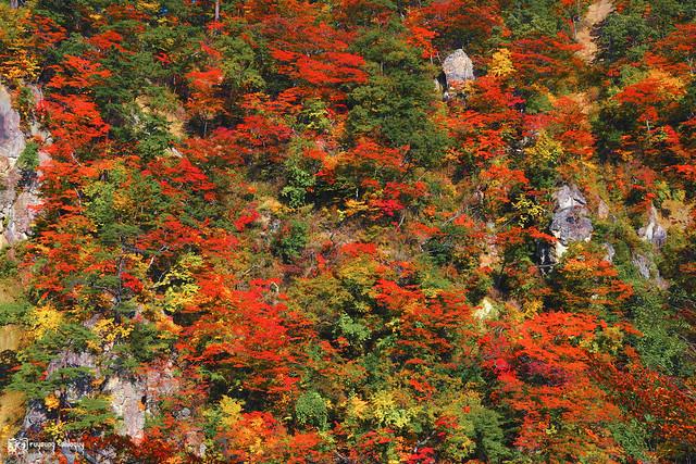 秋色是山巒中的一抹紅 | 30