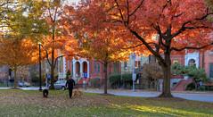 Fall in Logan Circle