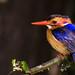 Colourful bird by Pascal Bernardin