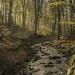 Autumnal Woodland sketch