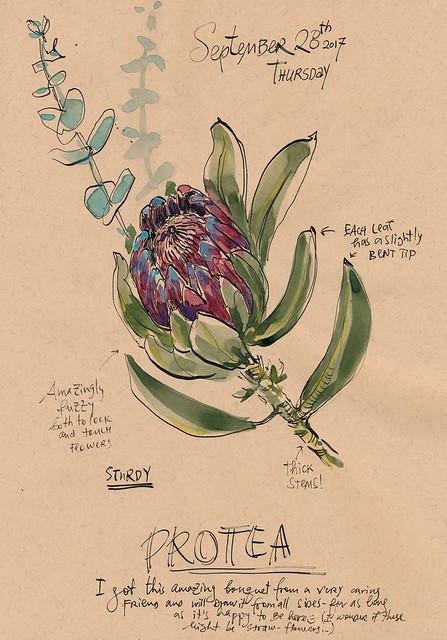 Sketchbook #109: Protea